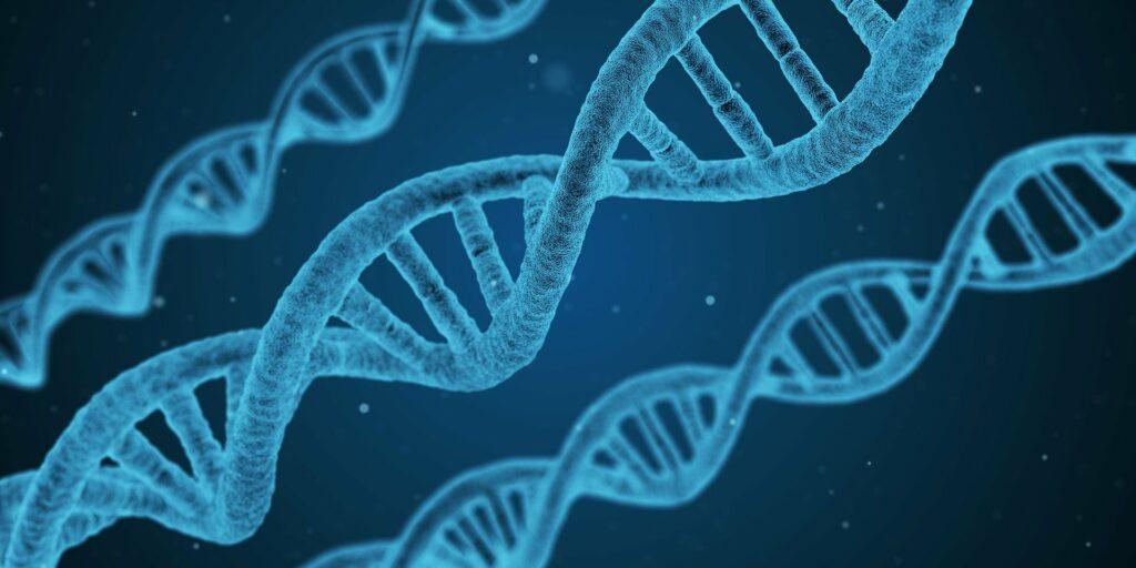 Algunos factores genéticos juegan un papel en el desarrollo de cáncer de mama.